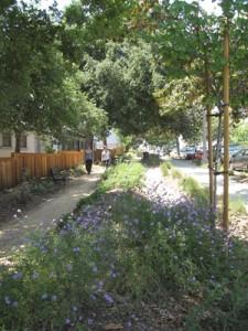 Pasadena Union Catalina Garden