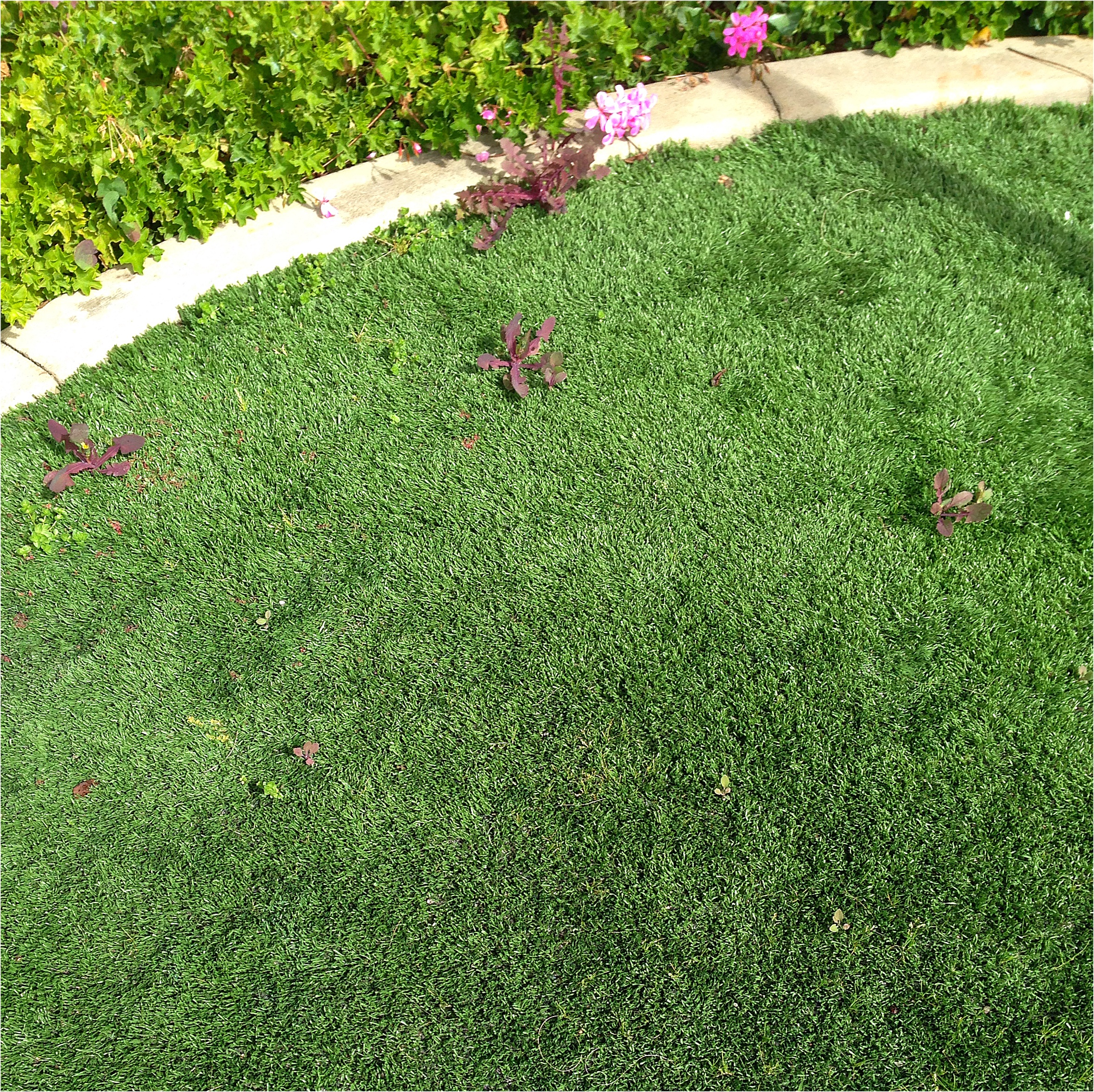 Far from being no maintenance, artificial turf grass needs maintenance on a regular basis