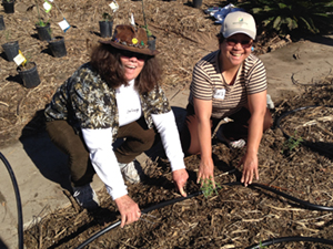 planting & irrigation